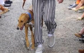 Trussardi: nicht ohne meinen Hund, Rad, ...
