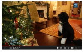 18. Türchen: First Dog auf Inspektionstour