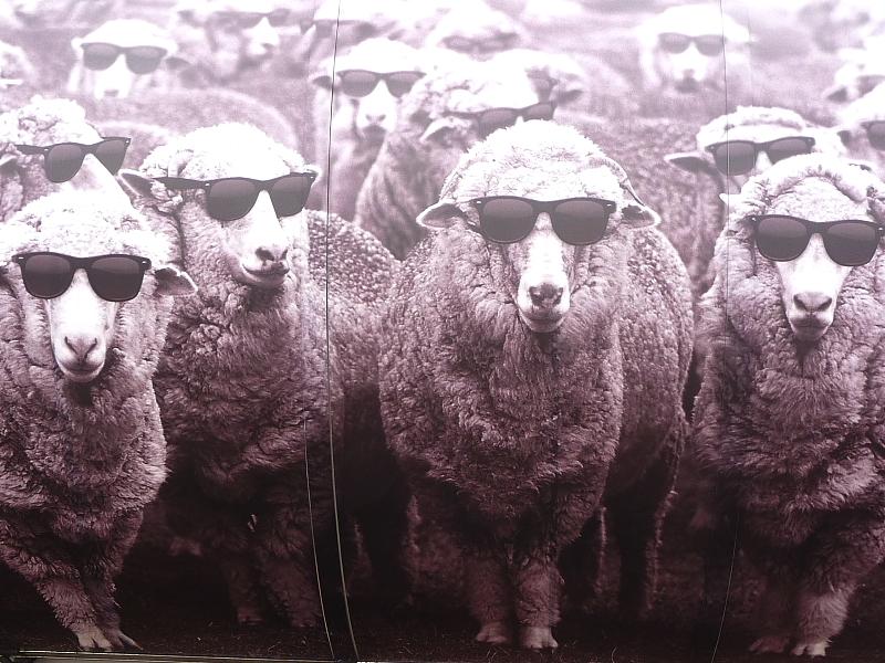 Schafe Premiere Vision