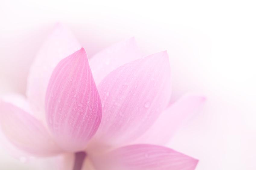 Lotuszellenwasser: Der aus erntefrischen Lotusblättern gewonnene Wirkstoff ist reich an Mineralien und Spurenelementen. Er wirkt beruhigend und hautglättend.