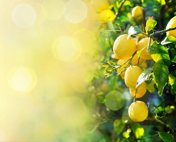 Vitamin C hat anti-entzündliche Eigenschaften, stimuliert die Kollagenbildung und wirkt freien Radikalen entgegen. Es verhindert die Unterdrückung des Haut-Immunsystems durch UV-Strahlung, reduziert Unregelmäßigkeiten der Pigmentierung (Altersflecken) und schenkt einen strahlenden, ebenmäßigen Teint. Cicé benutzt Vitamin C aus den USA, weil dieses sich als besonders wirkungsvoll herausstellte.