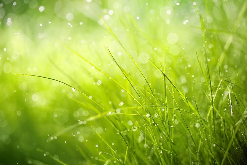 Hyaluronsäure: Die Wasserbindungskapazität der auch in der Haut natürlich vorkommenden Hyaluronsäure ist extrem hoch. Sie ist sowohl feuchtigkeitsspendend als auch feuchtigkeitsbewahrend. Ein unsichtbarer, aber luftdurchlässiger Film reduziert den transepidermalen Wasserverlust und schützt die Hornhaut vor dem Austrocknen. Die Haut wirkt sofort straffer und glatter.
