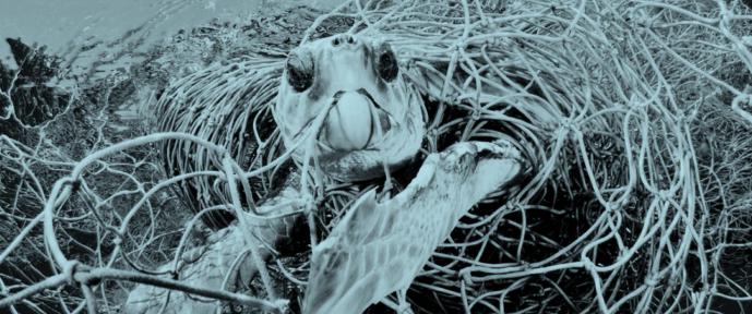 """Jedes Jahr werden Tausende Meeresschildkröten von Fischern """"versehentlich"""" gefangen. Sie geraten in deren Netze oder bleiben an den Angelhaken hängen. Die ohnehin schon vom Aussterben bedrohten Meeresreptilien werden durch diese Verluste weiter gefährdet."""
