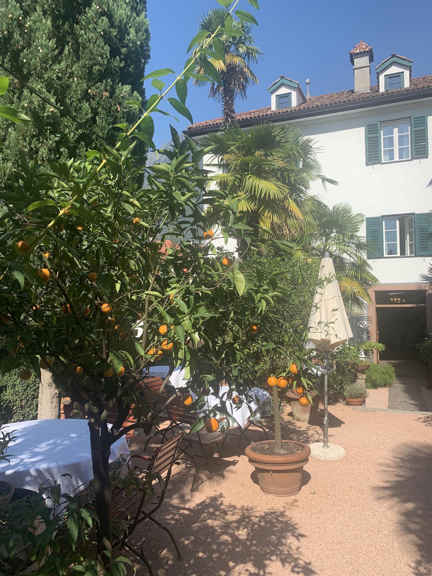 Orangenbäume Südtirol Modepilot